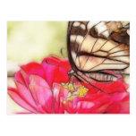 Mariposa amarilla de Swallowtail en un Zinnia Postal