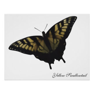 Mariposa amarilla de Swallowtail Posters