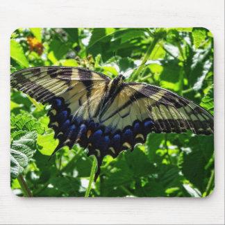Mariposa amarilla del este de Swallowtail Alfombrillas De Ratones