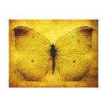Mariposa amarilla del vintage impresion en lona