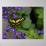 Mariposa amarilla en la impresión violeta de las f poster