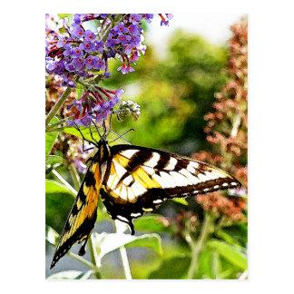 Mariposa amarilla en la mariposa Bush de la Postal