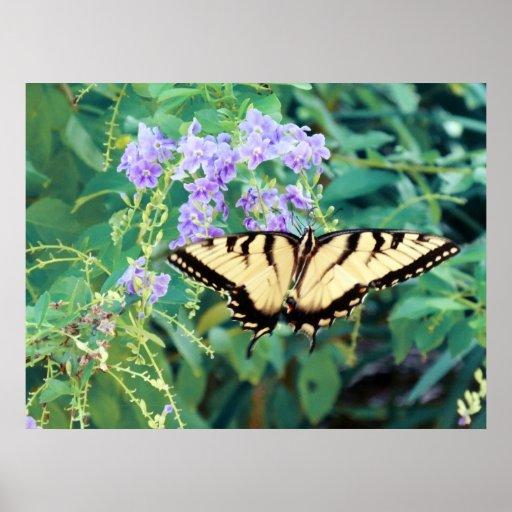 Mariposa amarilla en las flores púrpuras poster