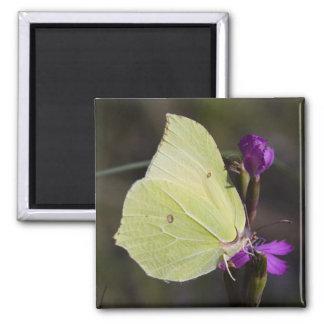 mariposa amarilla imán cuadrado