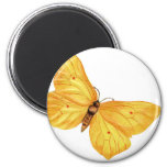 mariposa amarilla iman