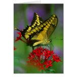 Mariposa amarilla y negra felicitacion