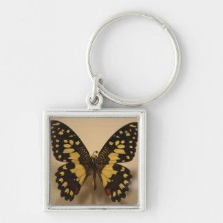 Mariposa amarilla y negra llavero cuadrado plateado