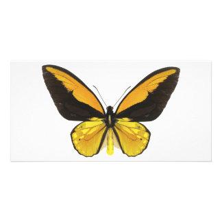 Mariposa amarilla y negra tarjeta personal con foto