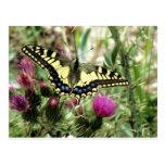 Mariposa amarillo claro y azul postal