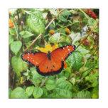 Mariposa anaranjada azulejos