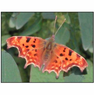 Mariposa anaranjada brillante. Coma Escultura Fotografica