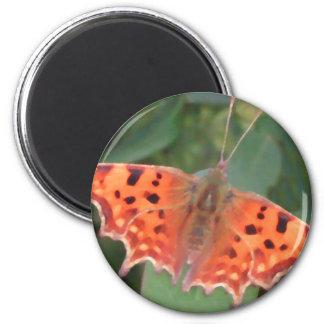 Mariposa anaranjada brillante. Coma Imán Para Frigorifico