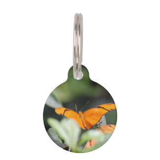 Mariposa anaranjada brillante placa de mascota
