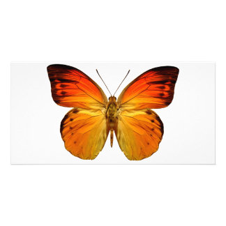 Mariposa anaranjada brillante tarjeta fotografica personalizada
