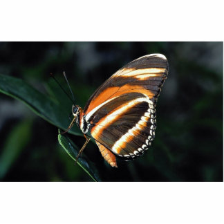 Mariposa anaranjada calificada, central y Americ d Fotoescultura Vertical