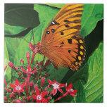 Mariposa anaranjada en Kalanchoe Azulejos