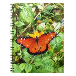 Mariposa anaranjada libretas espirales