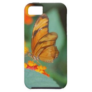Mariposa anaranjada minúscula iPhone 5 cárcasa
