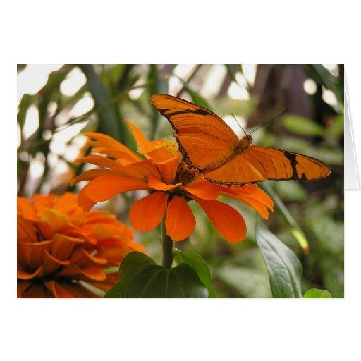 Mariposa anaranjada tarjeta pequeña