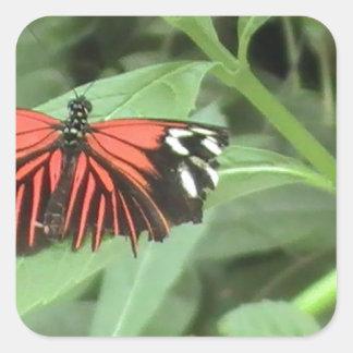 Mariposa anaranjada tropical pegatina cuadrada