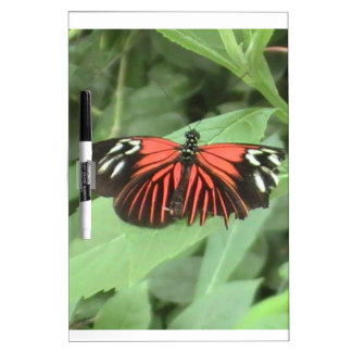 Mariposa anaranjada tropical pizarra
