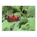 Mariposa anaranjada tropical postal