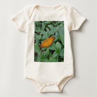 Mariposa anaranjada y negra enterito