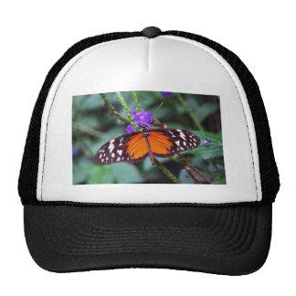 Mariposa apacible abierta gorros