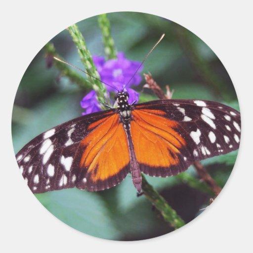 Mariposa apacible abierta pegatina redonda