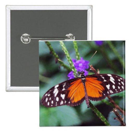 Mariposa apacible abierta pins