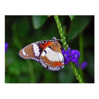 Mariposa apacible cerrada tarjeta postal