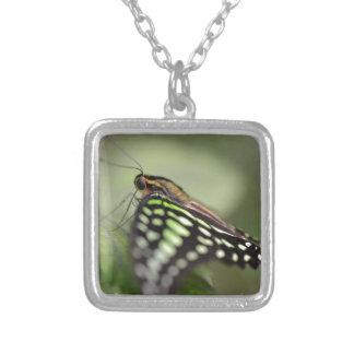 Mariposa atada de jay en la hoja collar plateado