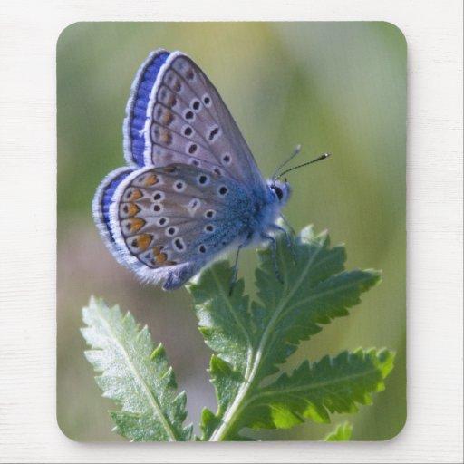 mariposa azul alfombrillas de raton