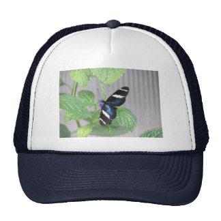 Mariposa azul, blanco y negro gorros