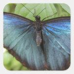 Mariposa azul calcomanía cuadradas personalizadas