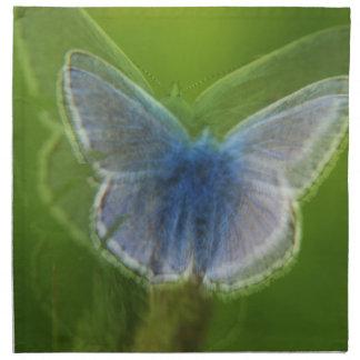 Mariposa azul de Adonis borrosa Servilleta De Papel