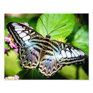 Mariposa azul de las podadoras fotografías