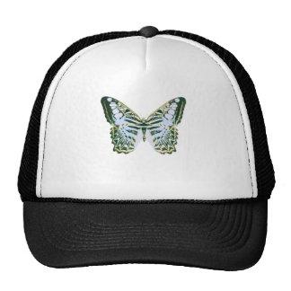 Mariposa azul de las podadoras gorras