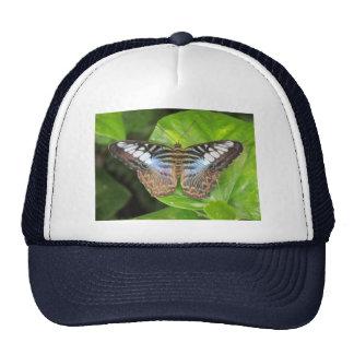 Mariposa azul de las podadoras gorros bordados