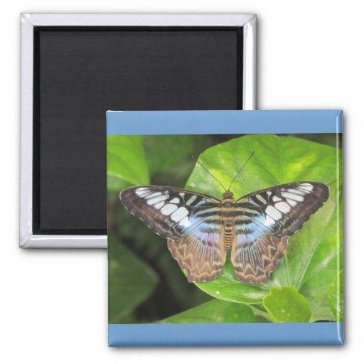 Mariposa azul de las podadoras imán de nevera