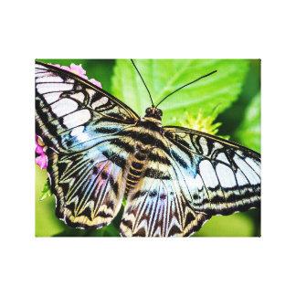 Mariposa azul de las podadoras impresión en lienzo estirada