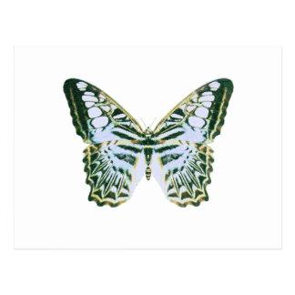 Mariposa azul de las podadoras postales