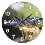 Mariposa azul de las podadoras relojes
