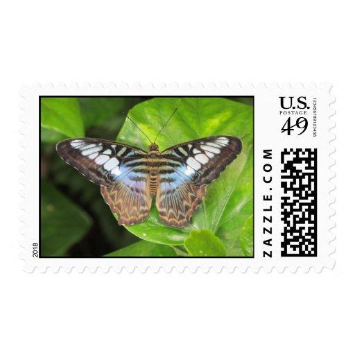 Mariposa azul de las podadoras sellos postales