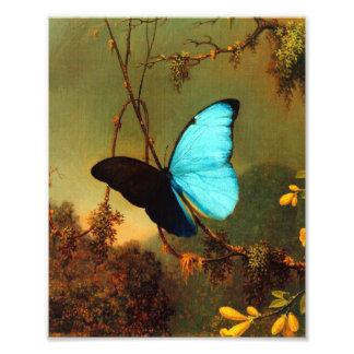 Mariposa azul de Martin Johnson Heade Morpho Foto