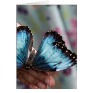 Mariposa azul de Morpho