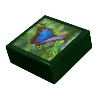 Mariposa azul de Morpho Caja De Recuerdo