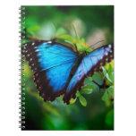 Mariposa azul de Morpho Libretas