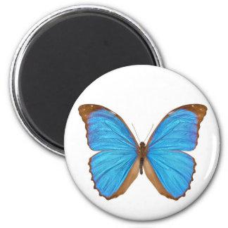 Mariposa azul de Morpho (Menelaus Morpho azul, Mor Iman Para Frigorífico