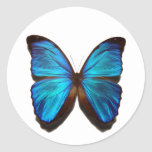 Mariposa azul de Morpho Pegatinas
